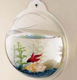 hangingfishbowl.jpg