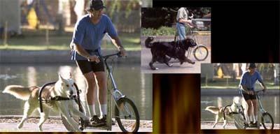 dogpoweredscooter.jpg